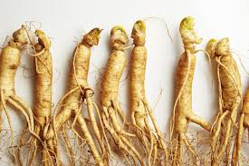 Ginseng - 5 Natural Nootropics Used All Over the World
